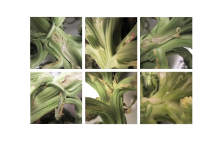 """""""Broccoli to Life"""", Photography, Six 10"""" x 10"""""""
